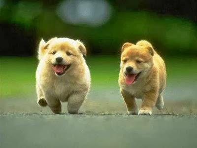 Imagen de perritos bonitos corriendo