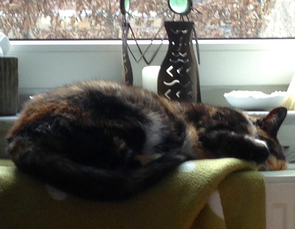 kat slaapt lui