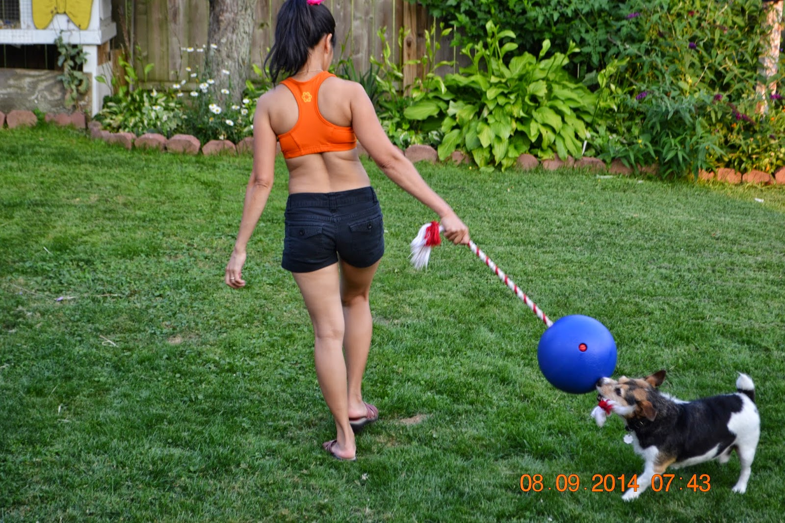 Pets Critters Nook Why Your Dog Is Hyperactive And Easy