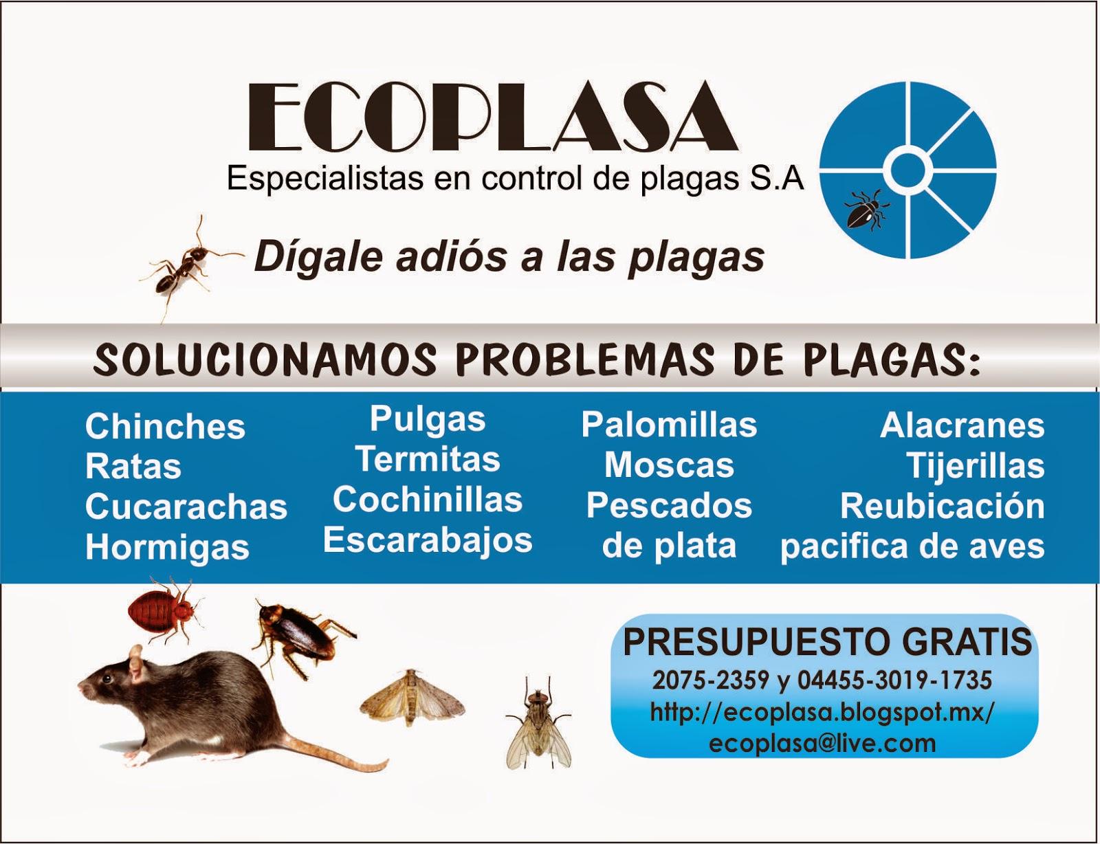 Ecoplasa especialistas en control de plagas s a flyer - Plaga de hormigas en mi casa ...