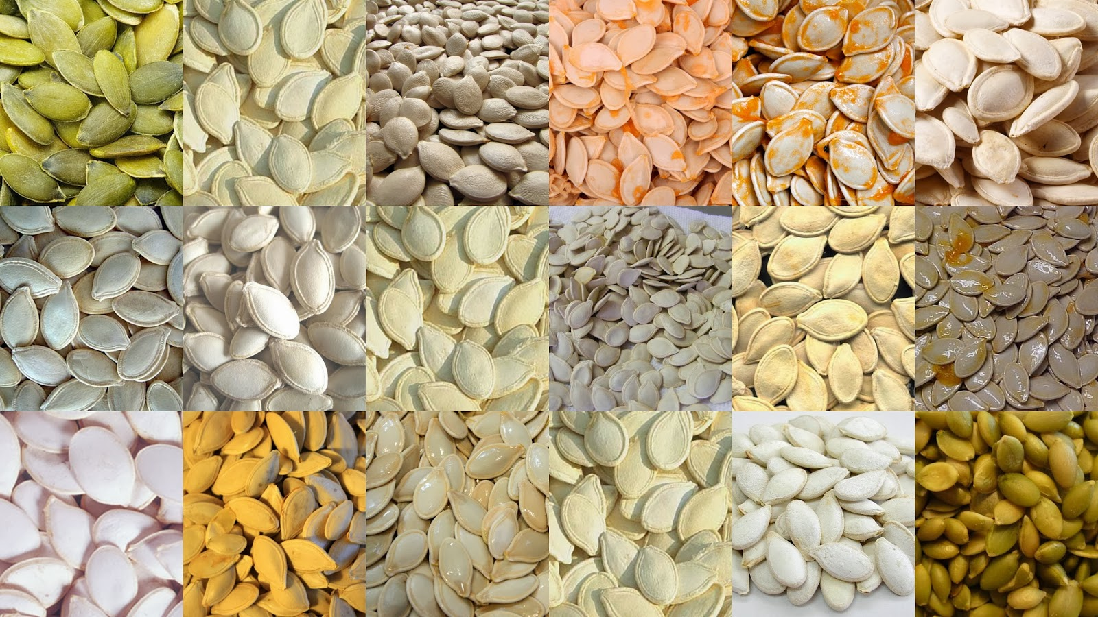 Various different types of pumpkin seeds