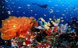 Diving Galery