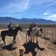Fun on Horses
