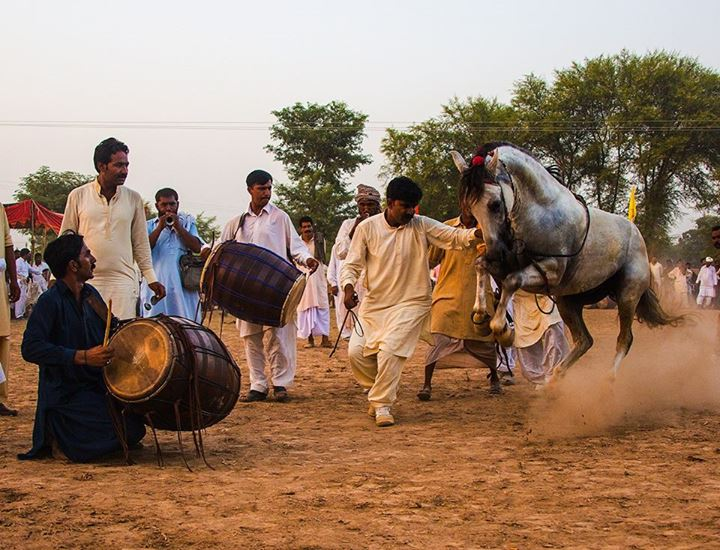 Tradiotional Horse Dance of Punjab