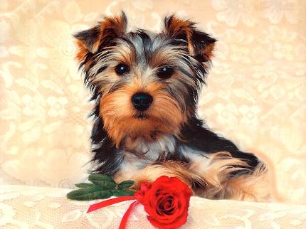 gambar anak anjing