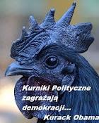Kurniki Polityczne zagrażają demokracji...