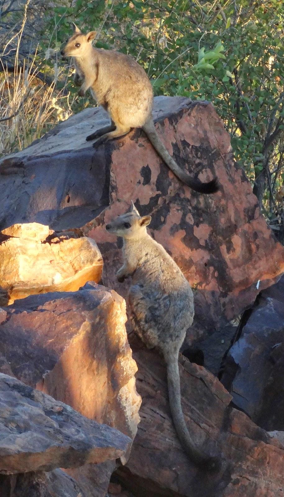 Sunshinecoastbirds Around Oz Part 16 Farewell To Wyndham