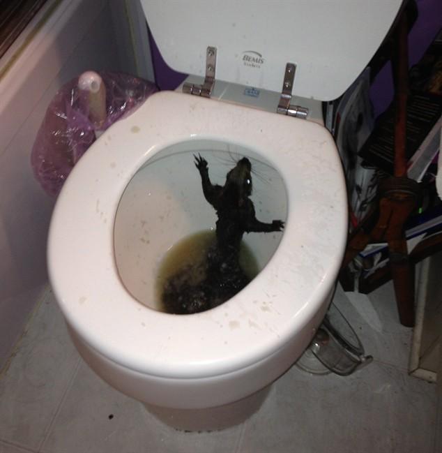 zhenskiy-tualet-krupnoe-foto
