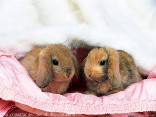 Two cute bunnies.