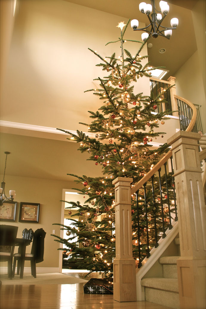 4 Foot Christmas Trees