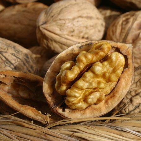 Blog 75 recettes p rigord croquants aux noix for Quand ramasser les noix