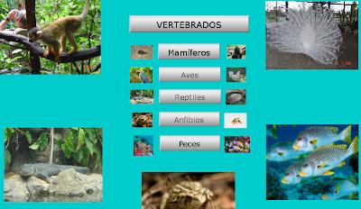 https://constructor.educarex.es/odes/primaria/conoc/vertebrados/