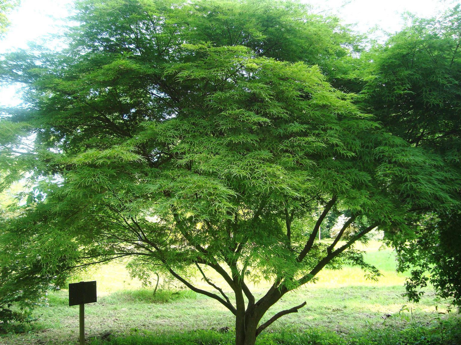 Le blog de parcs et jardins de l 39 oise sortie en thi rache for Les arbres du jardin