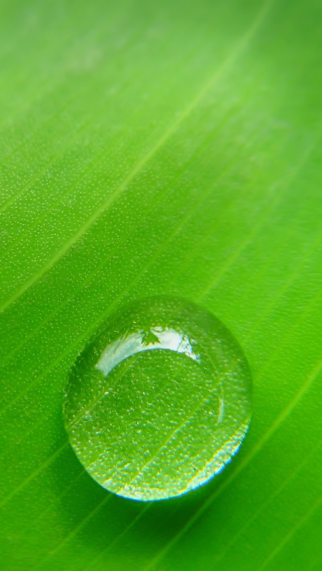 15 water drops Wallpaper for iPhone 5