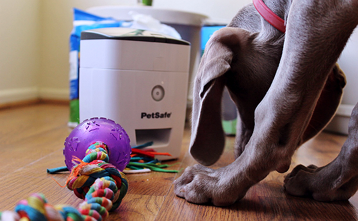PetSafe's Train N' Praise system helps potty train your dog with positive reinforcement in the form of treats. The unique moisture sense potty pads reward your pet instantly, even when you are not there to do so! The reward system even comes with a remote so you can use the system to reward positive behaviours long after potty training! #sp