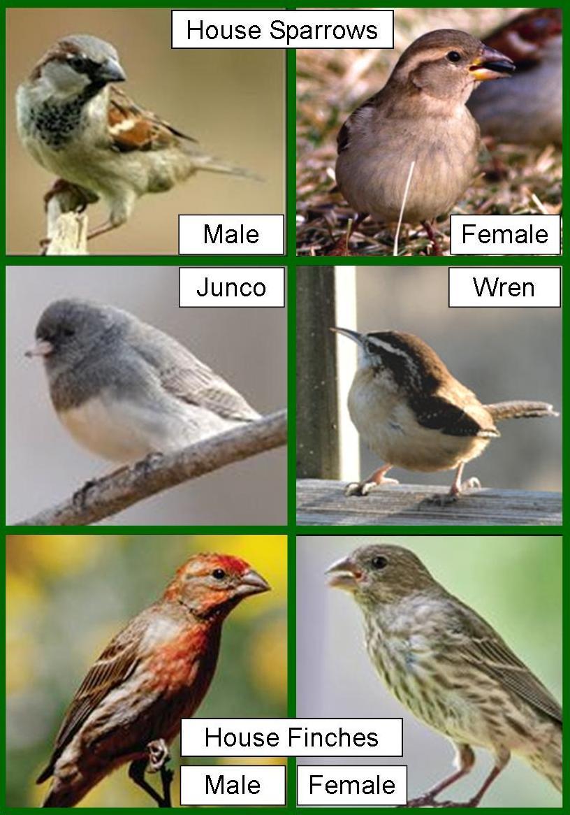 wild birds unlimited identifying brown birds do birds change