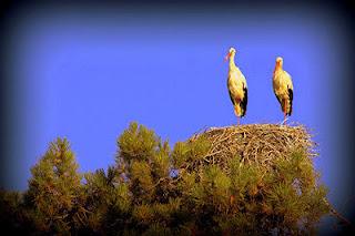 bulgaria property storks