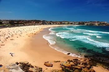 Il Governo australiano dichiara guerra agli squali