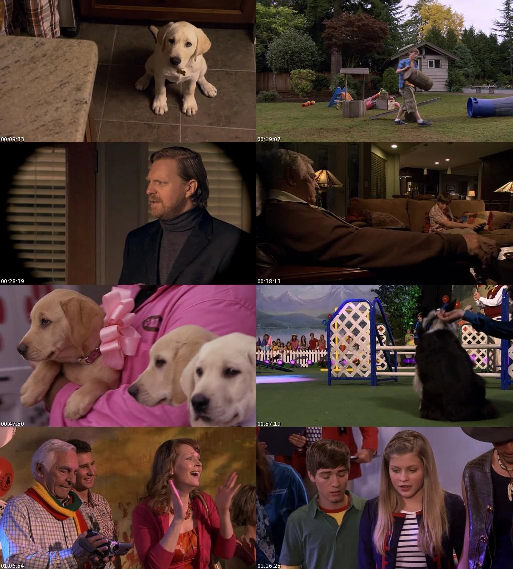 Marley y Yo 2: Los años de cachorro (2011) [DVDRip] [Latino]