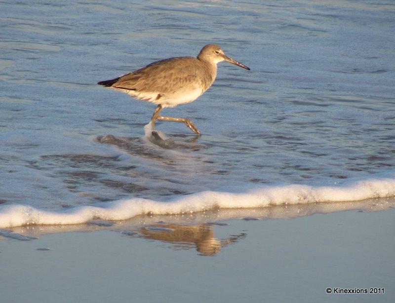 Image Result For Seagulls Dog