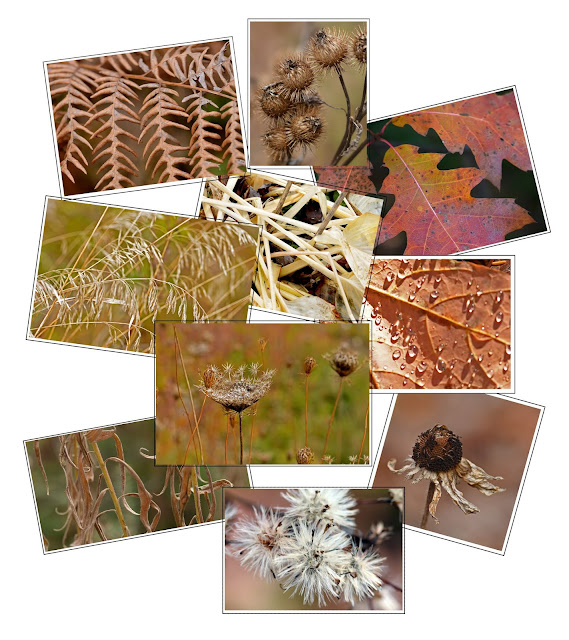brown leaves stems collage