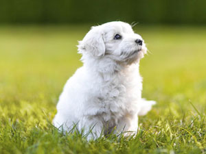 How to find the right puppy school?