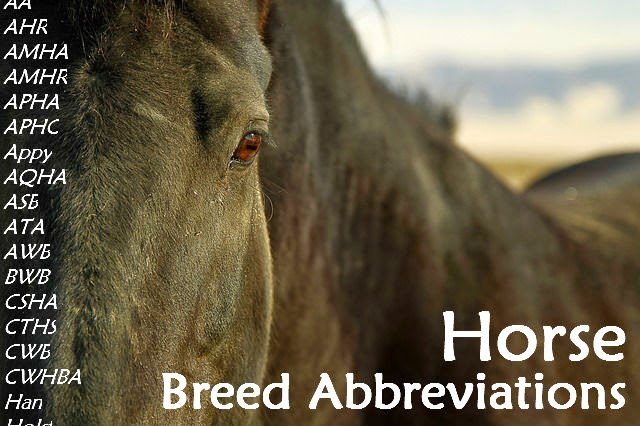 Horse Breed Abbreviations