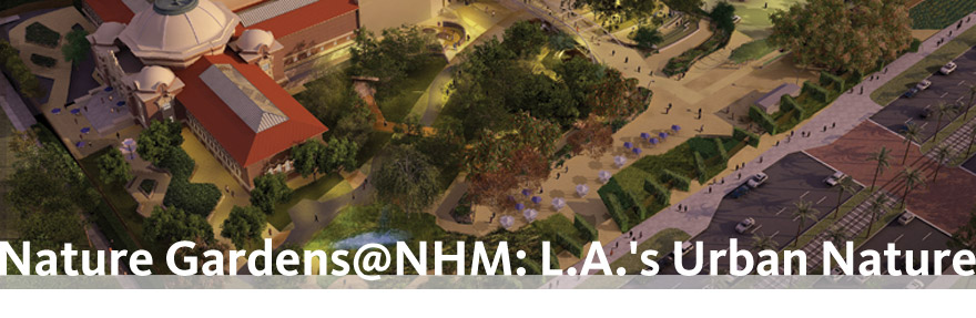 Nature Gardens @ NHM: L.A.'s Urban Nature