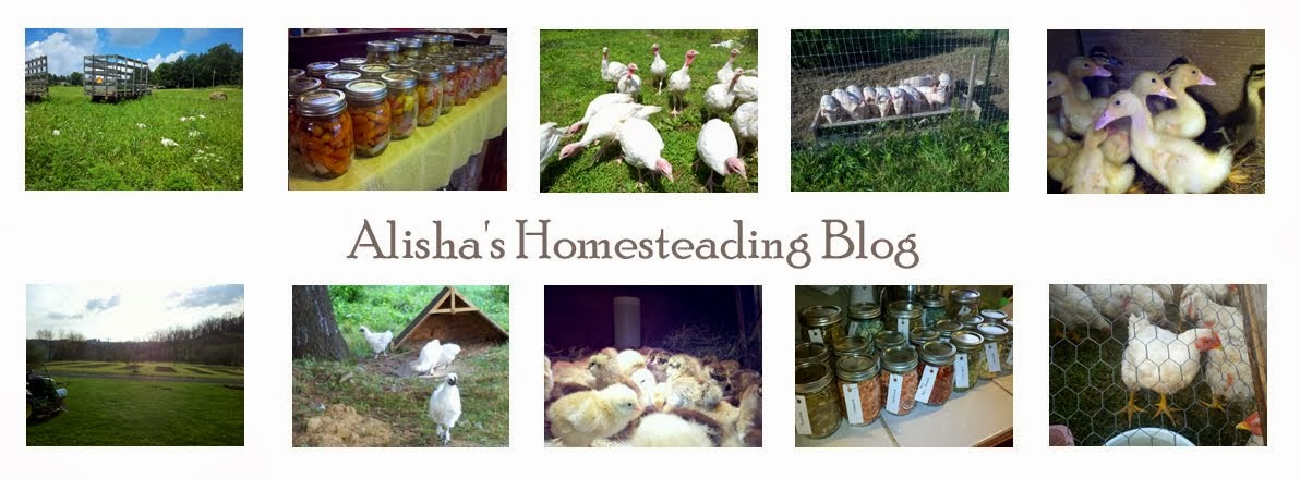 Alisha's Homesteading Blog