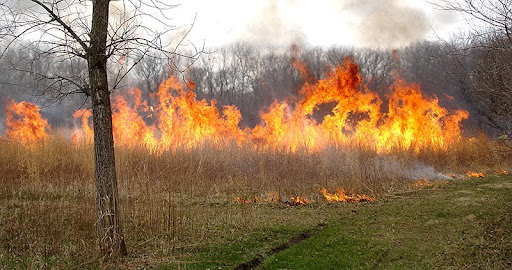Prescribed burn (photo by Rachel Smith)
