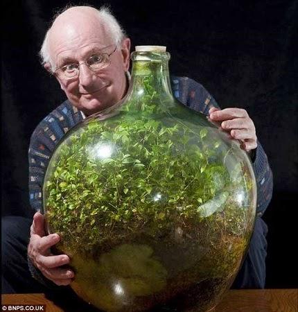 Terrario en Botella, Plantas Vivas Dentro las Botellas