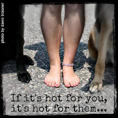 Por favor, cuida a tu mascota del pavimento caliente.