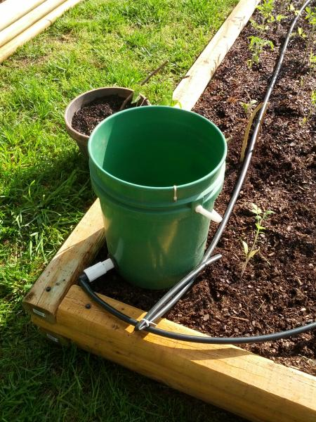 Delete The Nuts Drip Irrigation Experiment