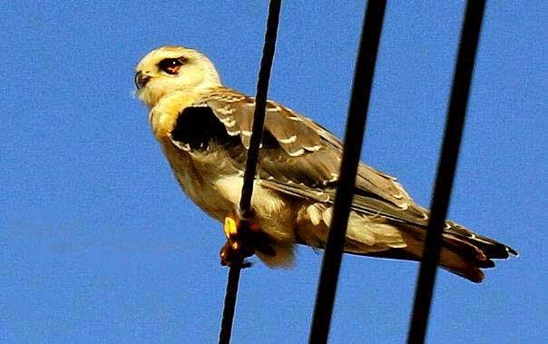 owl-birds-wallpapers-image
