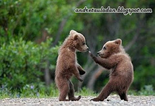 kungfu animal baby bear