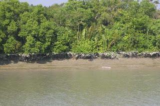 Taman Nasional Sundarbans