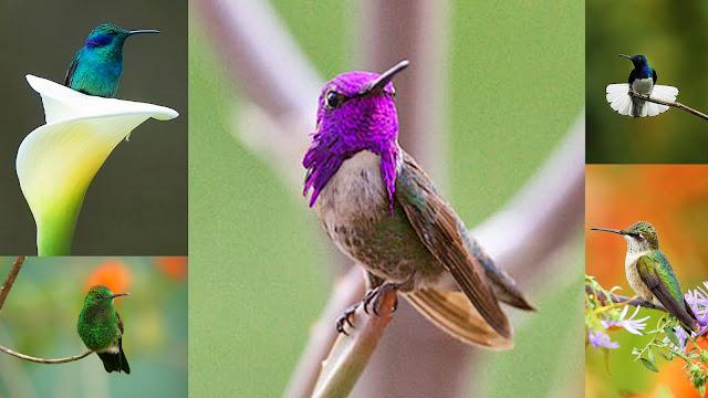 God's most beautiful creation, hummingbirds