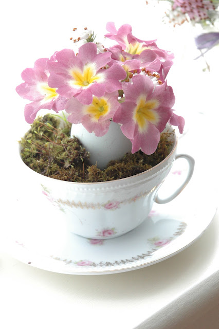 Pink primroses with a yellow centre in a rose patterned china cup.
