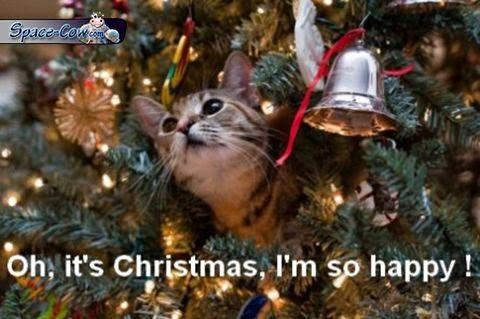 funny cute Christmas cat