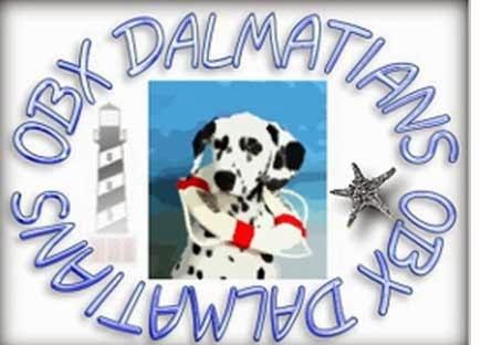 OBX Dalmatians Web Site