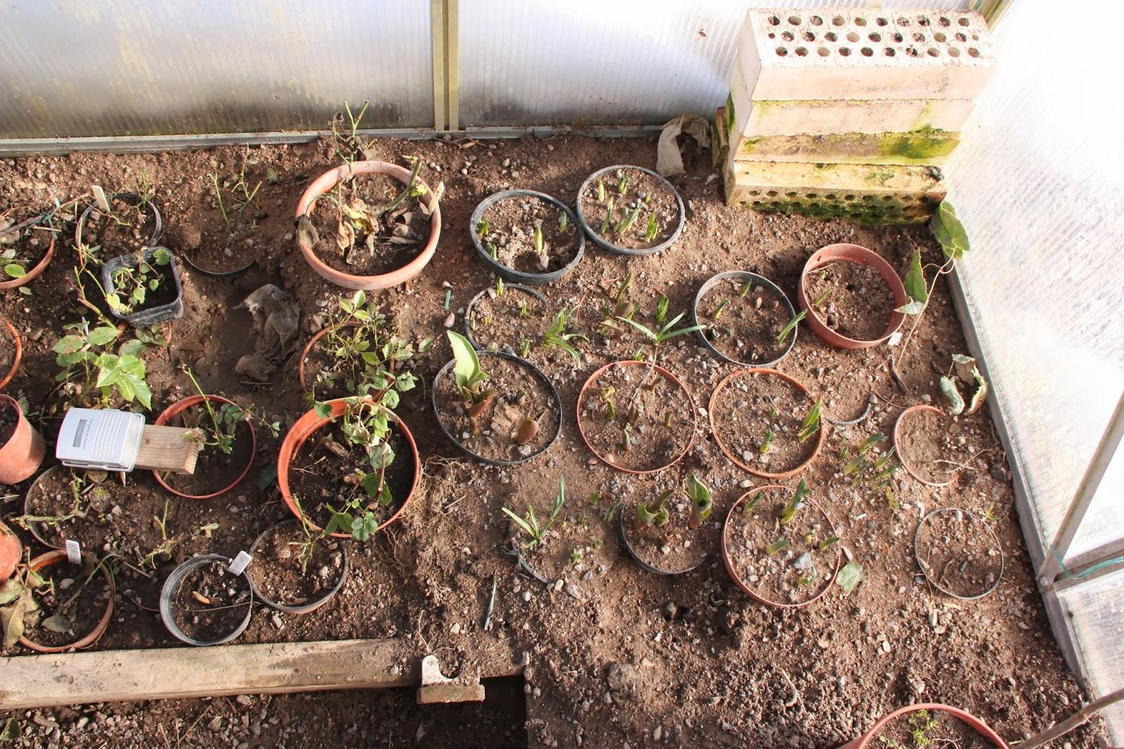 Växthus Odla : I huvudet på en trädgårdsmästare hobbyväxthus