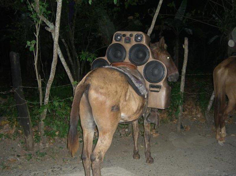 sistema som cavalo