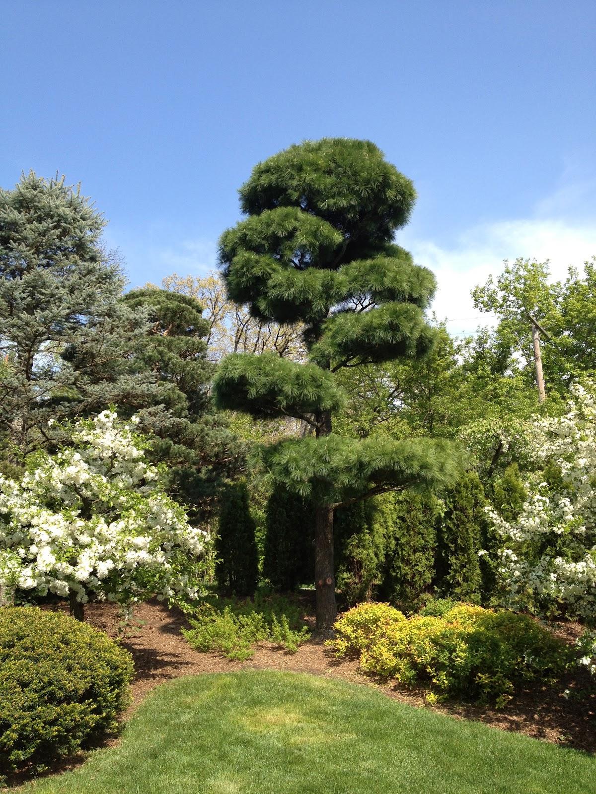 Garden of reflection trees in japanese gardens for Japanese garden trees