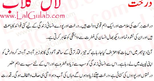 fashion essay in urdu