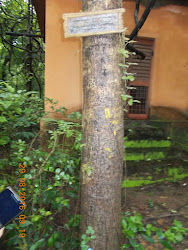 "A Sponsored tree in ""B.N.H.S""  forest reserve"