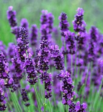 ARTE Y JARDINERA  Plantas anuales y bianuales en Diseo de jardines