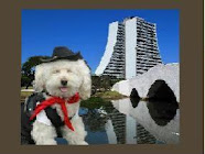 Creches para cães em Porto Alegre