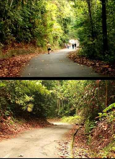 hiking mount Pulai johor