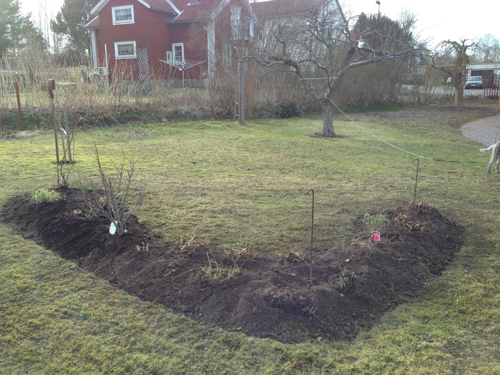 Karina marias trädgård: mellan hästar och fotboll....