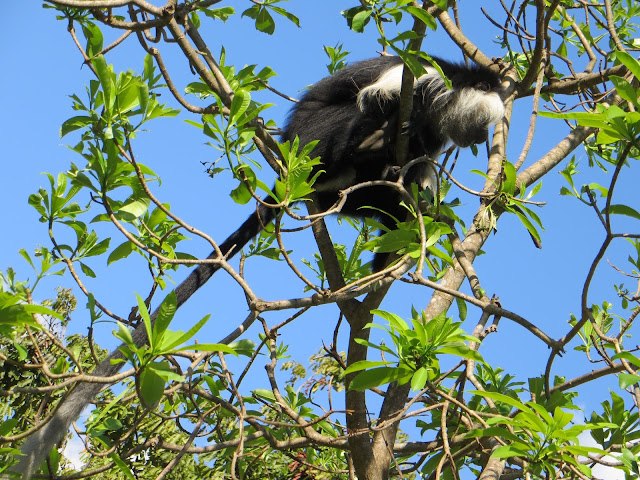 Udzungwa Mountain National Park Tanzania